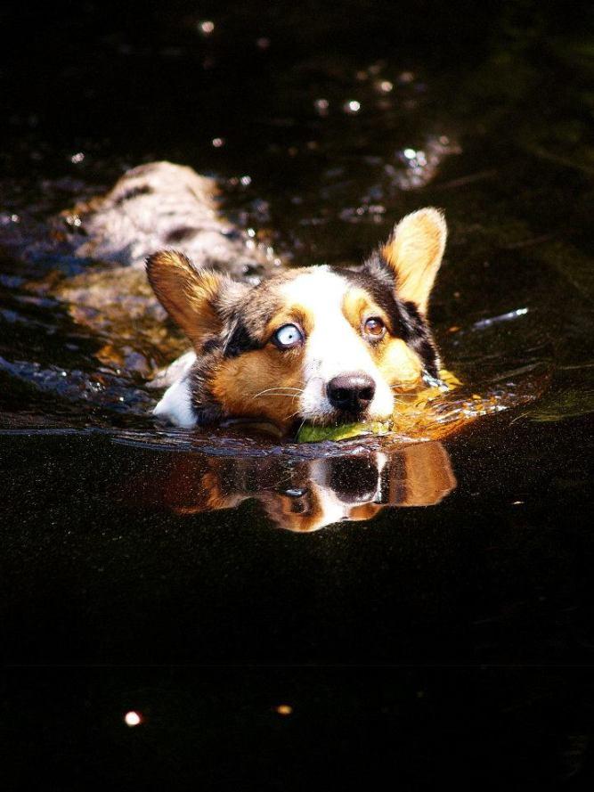 ellaswimming
