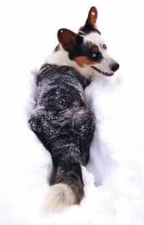 BRRR.SNOW